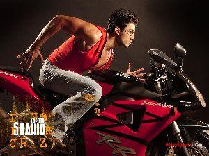 Shahid Kapoor : sha11a 1024