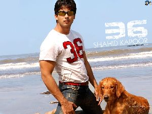 Shahid Kapoor : sha8v