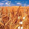 Telepopmusik Generic World album cover