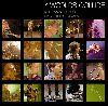 Neil Finn - 7 worlds collide album cover