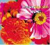 Lucinda Williams Essence album cover